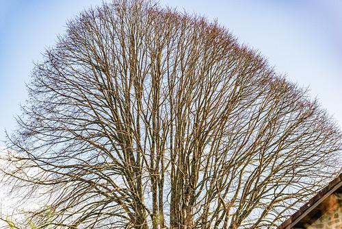 22-Tête d'arbre et toiture