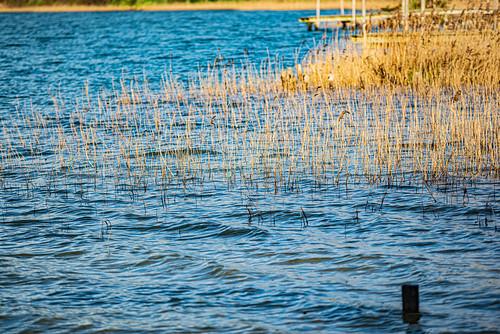 15-Rive du lac d'Arjuzanx