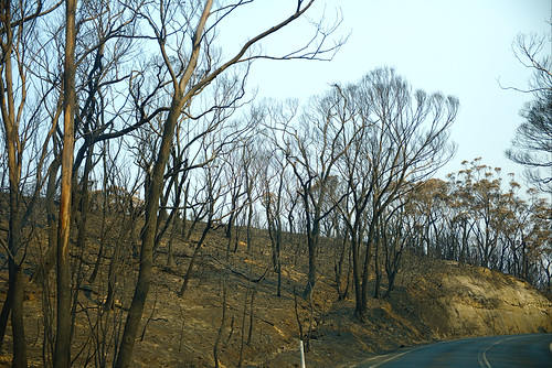 Bare trees, near Bell