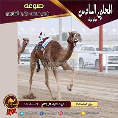 صور سباق الثنايا والحيل والزمول (أشواط الإنتاج) والسودانيات بالمحلي السادس صباح  2-1-2020