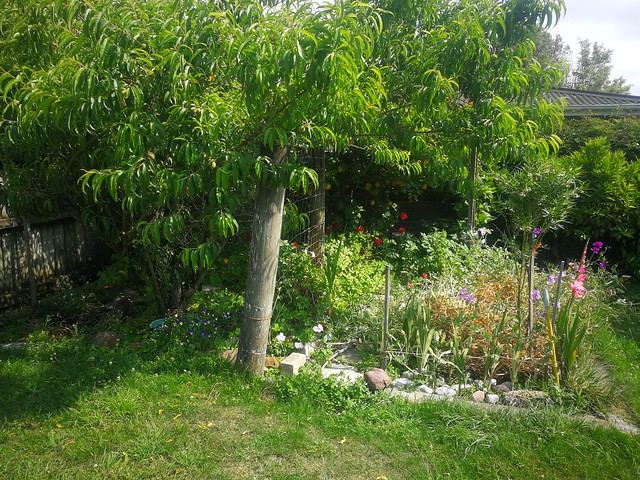 garden with peach tree