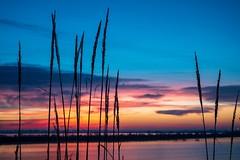 Simply Sunrise