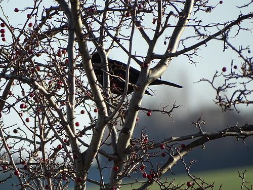 Im Baum versteckt