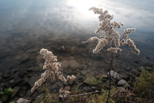 Plant near the water