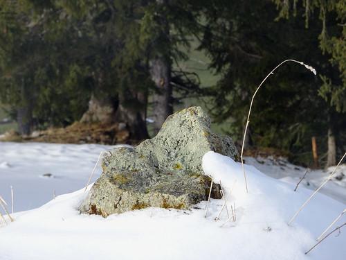 Stein im Schnee