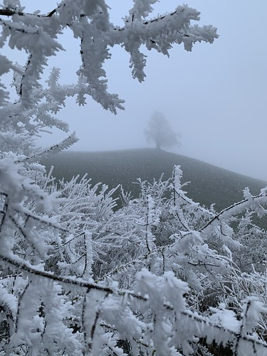 Frost near Bigenthal (BE)