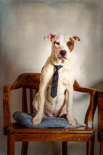 Mixed Breed Puppy Sitting Wearing a Tie