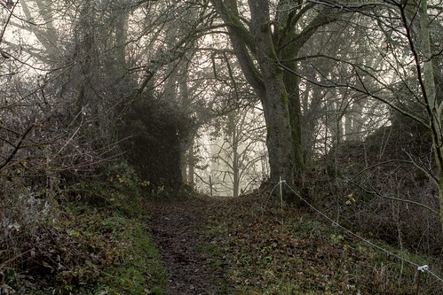 Mystics Woods