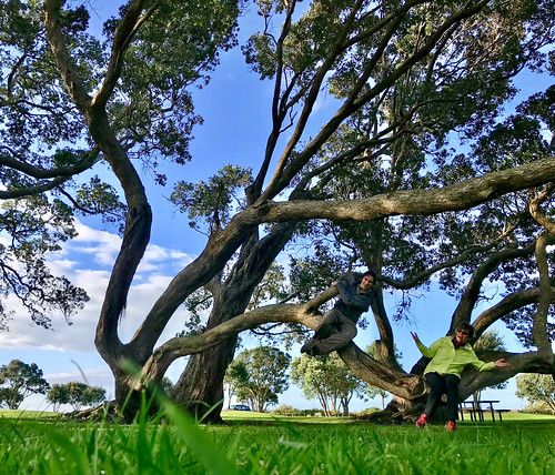 Crazy trees of Ohope