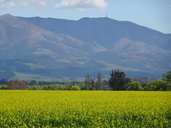 Hills and Fields of Gold