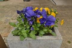 Bloemen in Ommen (136FJAKA_3225)