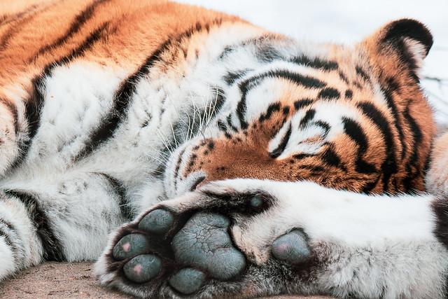 Puissance endormie