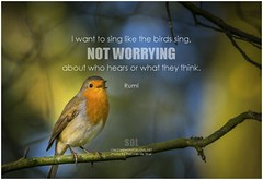 Rumi I want to sing like the birds sing, not worrying about who hears or what they think