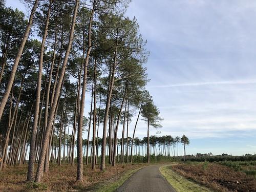 Forêt des Landes / Лес Ланды