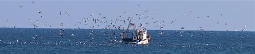 Trawler and Seagulls