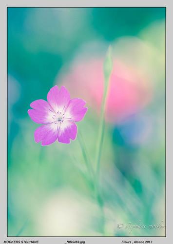 Fleurs , Alsace 2013