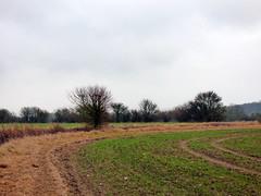 GOC Therfield 032: Landscape
