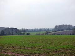 GOC Therfield 031: Landscape