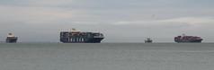 3 containerships, ??, CMA CGM Thalassa, Yang Ming YM Milestone, and 1 bulk carrier, anchored between Bay bridge and San Mateo Bridge. DSC_0779