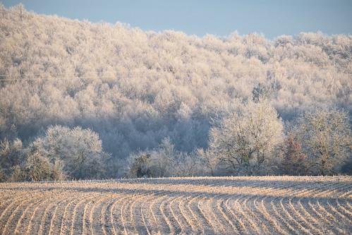 Nature blanche