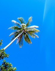 Coconut tree and clear blue sky