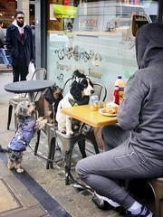 Not a Dog's Dinner