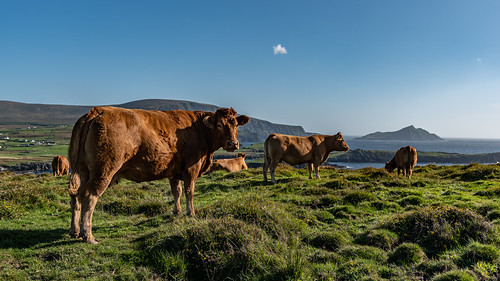 Ireland 2019 - Bray Head Walk, Valentia Island, Kerry