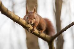 Little treehugger 🌳