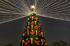 Christmas time in Saint Petersburg, Russia