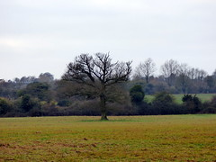 GOC Therfield 039: Landscape