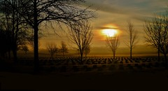 Cemetery Visit.