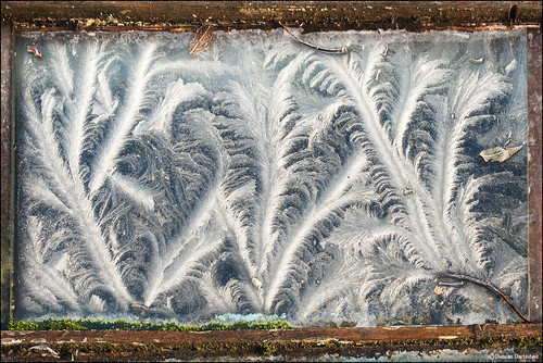 Frost on the cold frame