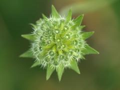 Fleur en gros plan