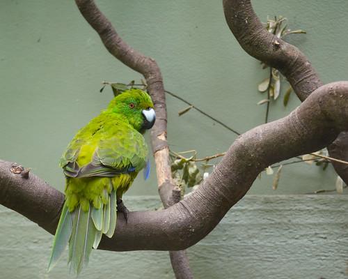 Birds of Otorohanga Kiwi House-1