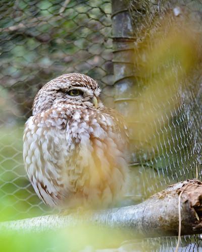 Birds of Otorohanga Kiwi House-5