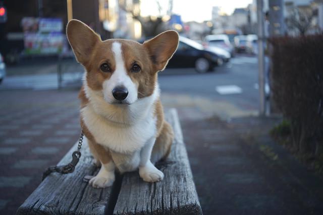 Photo:EIN 今日のお散歩♪ By luckyno3