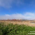 Aves en las lagunas de La Guardia (Toledo) 4-1-2020