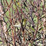 Aves en las lagunas de La Guardia (Toledo) 5-1-2020