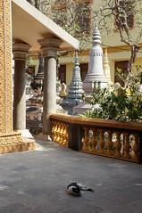 Phnom Penh, Wat Ounalom (14)
