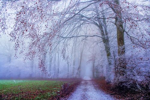 Winter days...