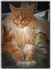 Der kleine Löwe ist müde! - The little lion is tired!