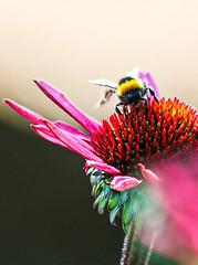 Flower, bee and sunshine