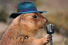 Prairie Dog Singing Musical Rodent Edited 2020