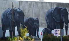 Elephants Wishing We Were There