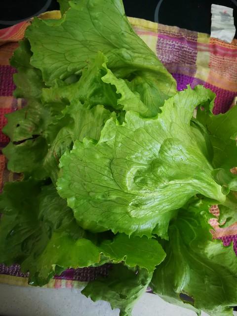 Another iceberg lettuce