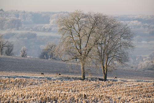 Dans ce froid matin de fin décembre