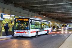 TCL / Irisbus Citelis 12 n°3323 et Iveco Urbanway 12 n°2444