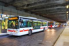 TCL / Irisbus Citelis 12 n°3336, Iveco Urbanway 12 n°3016 et Irisbus Citelis 12 n°3146