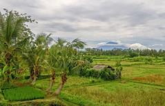 View from Balinese rice fields on Gunung Agung volcano