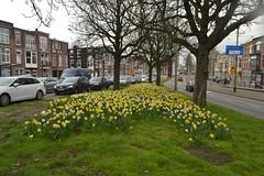 Bloemen in Den Haag (136FJAKA_3235)